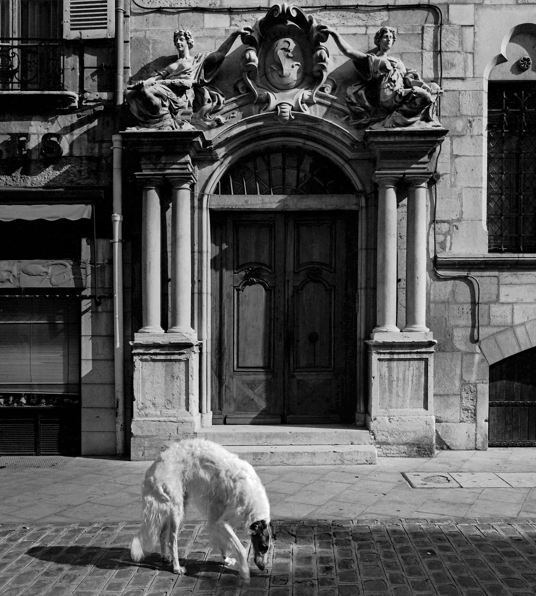 Dijon, France (020060)