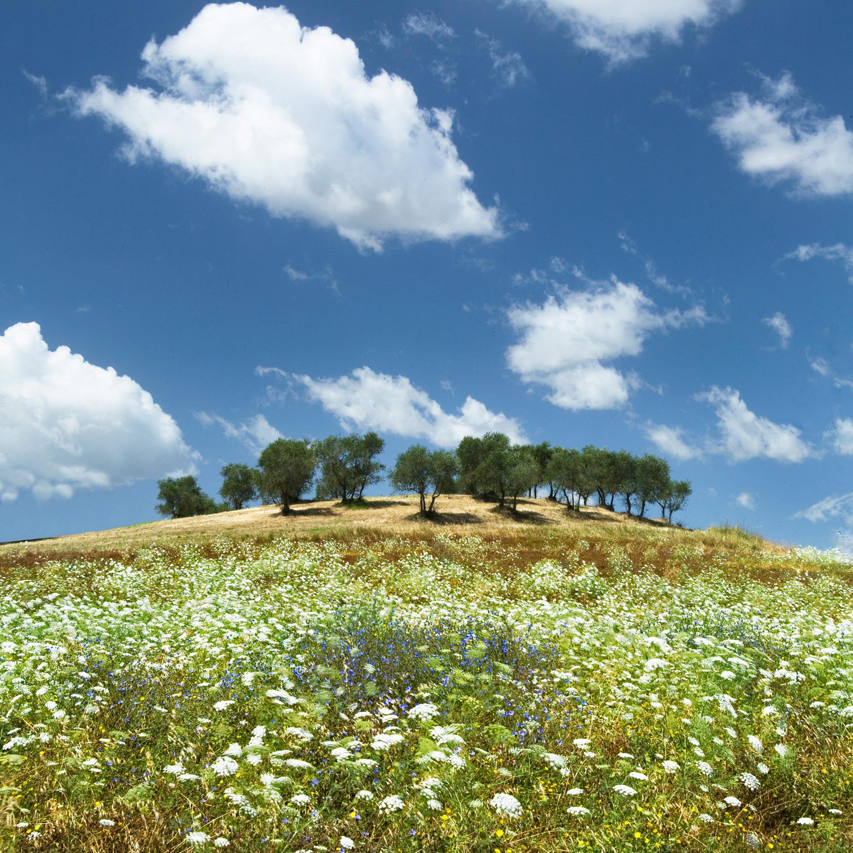Caliano, Tuscany, Italy (030047)