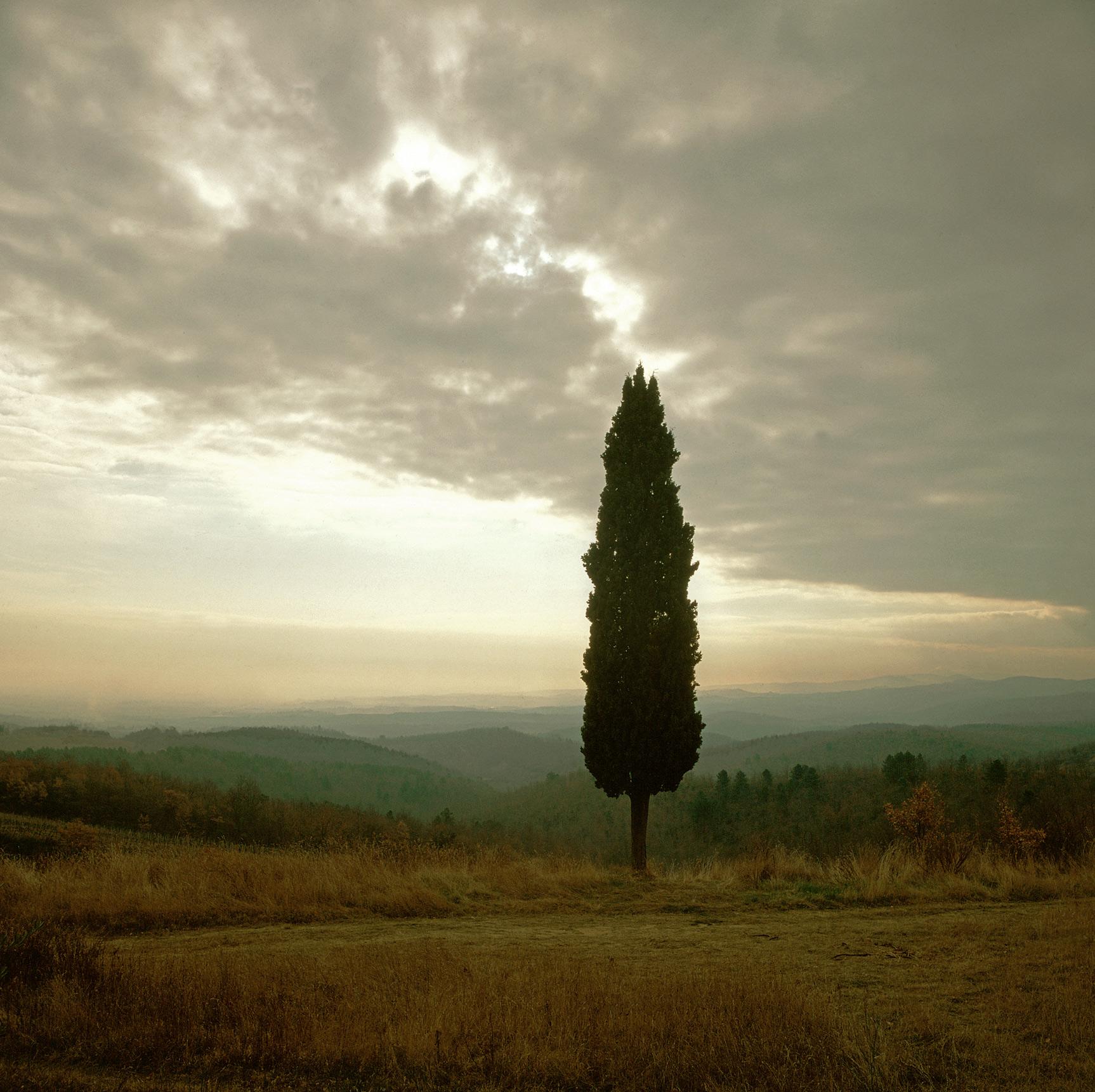 Sinalunga, Tuscany, Italy (030015)