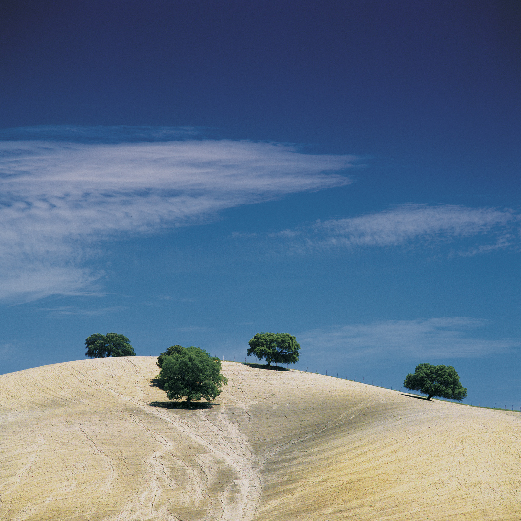 Bobble trees, Andalucia, Spain (045007)