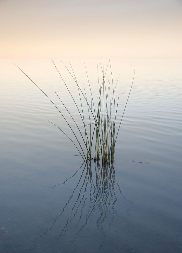 Reeds in Rio Uruguay | Landscape Photograph for Sale ...