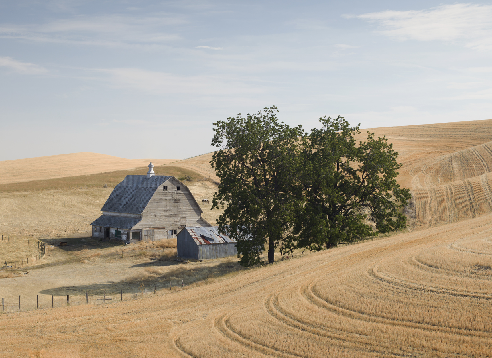 Barn and Horse, Palouse, USA (010040)