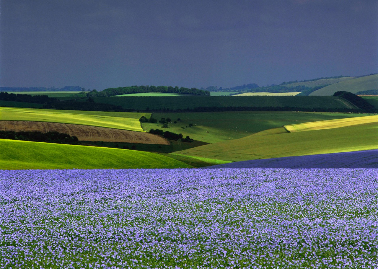 Rape and Flax, Wiltshire (001001)