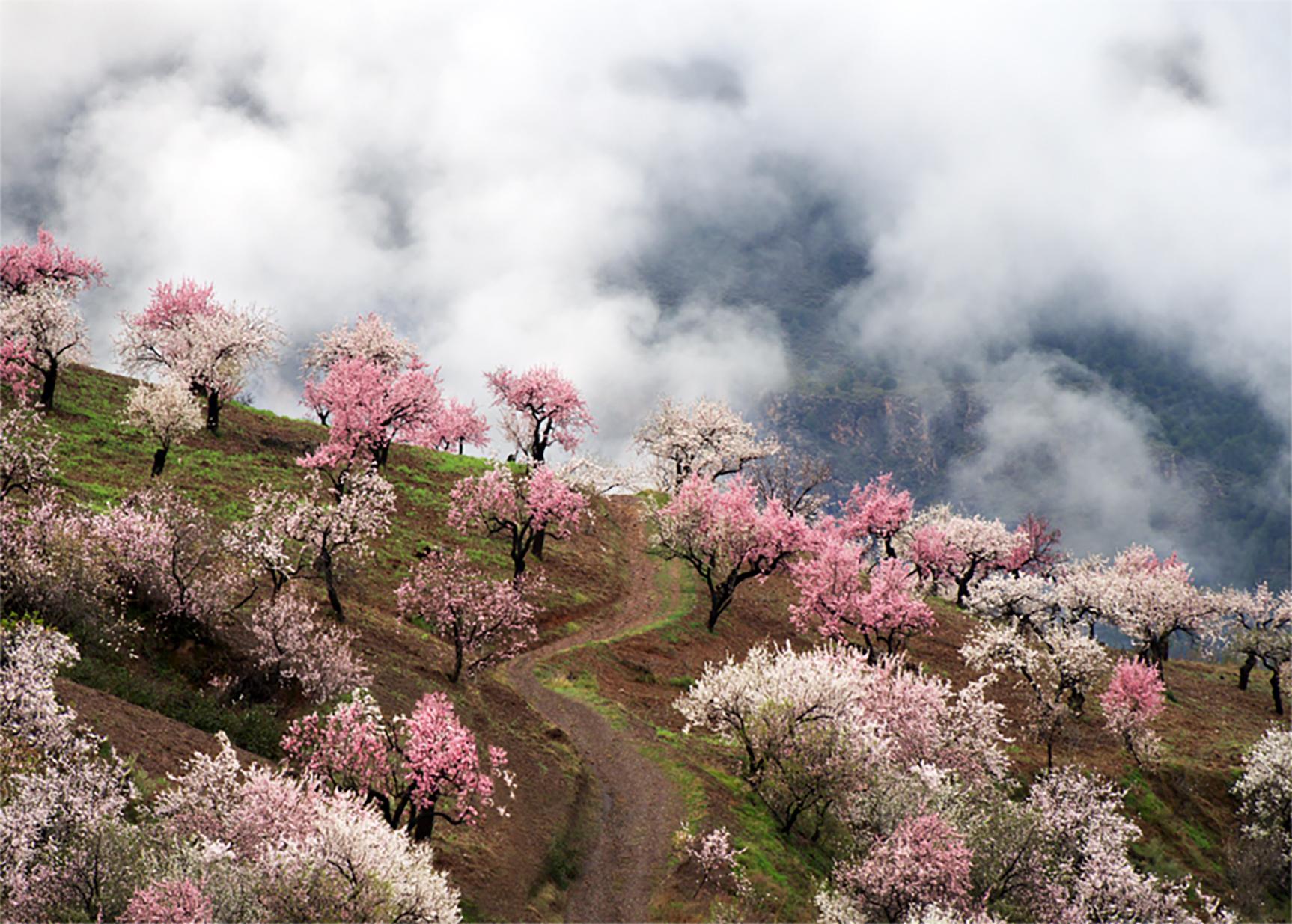 Above Orgiva, Andalucia, Spain (045015)